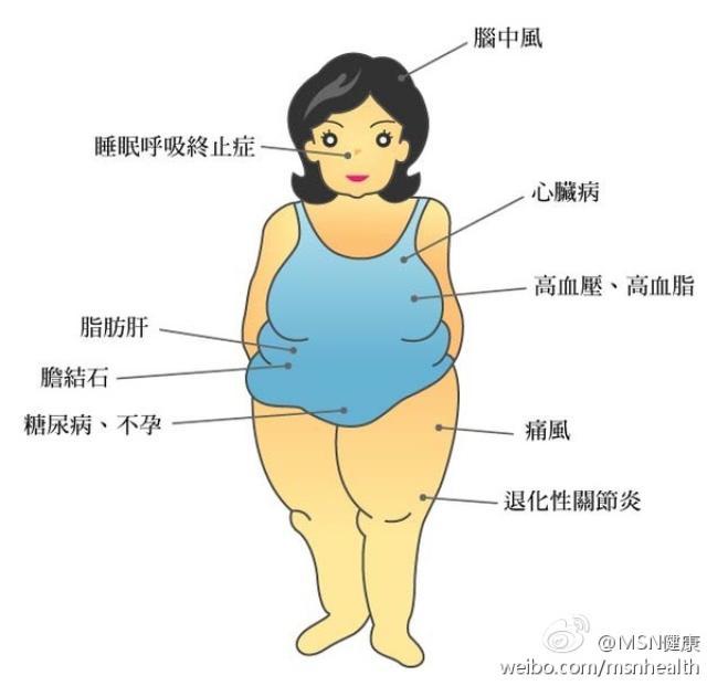 由此认为肥胖者脂肪肝损害的特点就是gpt和γgt的