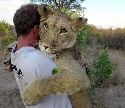 非洲野生动物志愿者