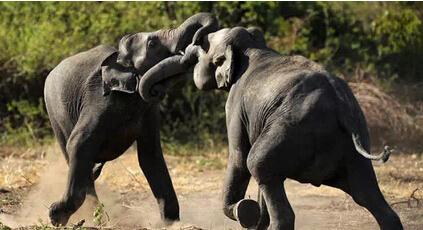 斯里兰卡野生动物保护组织